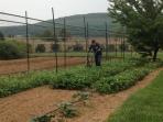 Gardening Intent