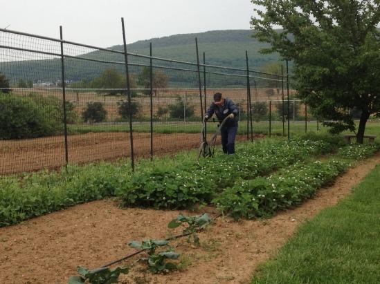 2014 Tad weeding